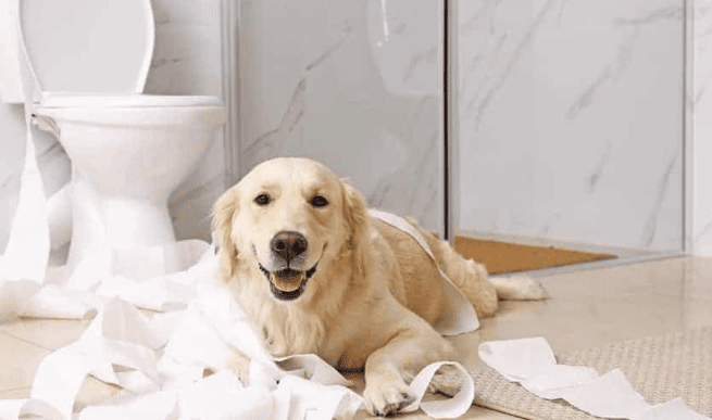 How To Pet-Proof Your Plumbing In San Diego